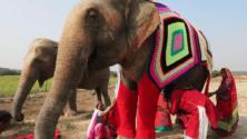 Inde : Ces femmes ont cousu des vêtements pour réchauffer leurs éléphants