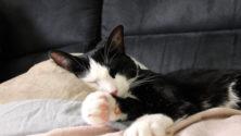 15 situations que chaque propriétaire de chat a déjà vécues