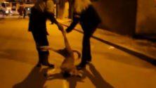 Maroc : Très bientôt la fin de l'abattage des chiens errants
