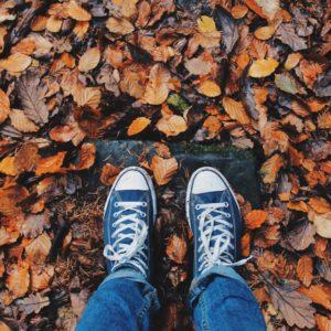 Les feuilles d\'arbres