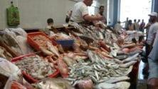 3500 km de côtes maritimes et 230 dh le kilo de poisson, comment et pourquoi ?