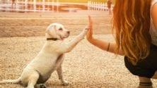 Le gouvernement a pris sa décision… et la gent canine est concernée