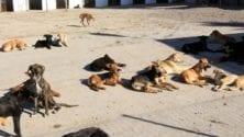 L'abattage des chiens au Maroc, une politique qui n'en finit jamais