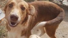 Animal de compagnie : 5 raisons pour adopter au lieu d'acheter