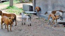 Les chiens errants ont été massacrés à Mohammedia