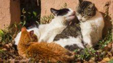 Près de 40 chats brûlés vifs par un homme à Safi