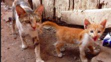 Une chatte violemment torturée à Casablanca secoue la toile