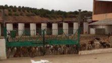Affamés et assoiffés, des chiens tenus en captivité à Agadir s'entretuent…