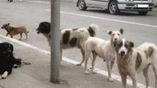 Les chiens errants ne seront plus abattus et empoisonnés au Maroc