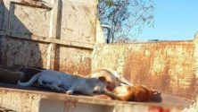 Dar Bouazza tâchée du sang des chiens errants !