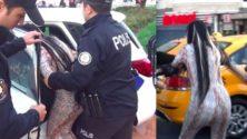 Vidéo: Elle serait marocaine et vient de semer la zizanie à Istanbul…