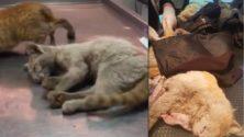 17 chats empoisonnés à la cité de Oulad Ziane