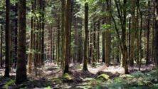 Deux marocains tuent une jeune femme enceinte et l'enterrent dans une forêt…