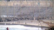 Vidéo : Une Marocaine essaye de rallier les côtes de Findeq depuis Sebta, à la nage