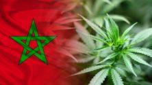 Le Maroc vote «oui» pour le cannabis lors d'un sommet de l'ONU