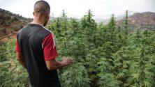 Où en est le projet de loi sur le Cannabis ?